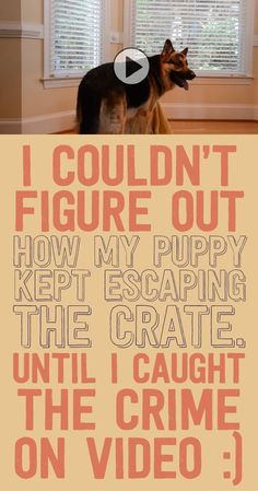 I couldn& figure out how my puppy kept escaping the crate until I caught the crime on video! Animals And Pets, Baby Animals, Funny Animals, Cute Animals, Cute Puppies, Cute Dogs, Dogs And Puppies, Doggies, I Love Dogs