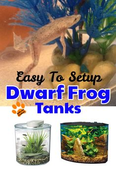 Easy To Setup African Dwarf Frog Tanks! Stuffed Animal Storage, Dog Food Storage, Diy Stuffed Animals, African Frogs, Dwarf Frogs, Frog Habitat, Frog Tank, Pet Frogs, Easy Pets