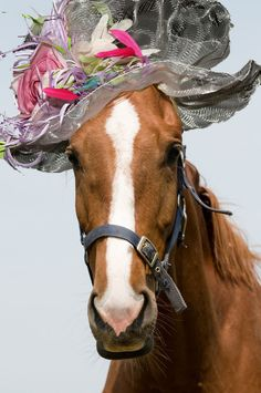 This horse is ready for Derby Fest!