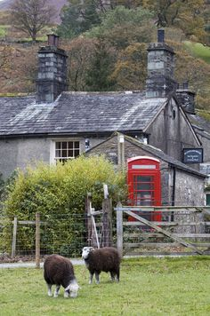 Herdwick Sheep, Red Phone Box and Lake District Stone Cottage in Borrowdale, Cumbria, England
