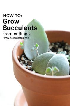 how to grow plants Now, before you say you have a black thumb or you cant grow anything, Im telling youyou can grow succulents. Or maybe your thumb is plenty green. In that case, I ha Propogate Succulents, Crassula Succulent, Succulent Cuttings, Succulent Gardening, Plant Cuttings, Succulent Care, Vegetable Gardening, Succulent Ideas, Cacti Garden
