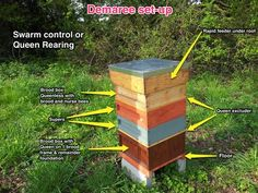 Queen Rearing | University of East Anglia Beekeeping Society