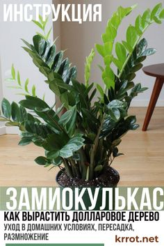 Balcony Plants, House Plants, Landscape Design, Garden Design, Home Flowers, Small Farm, Diy Bedroom Decor, Home Decor, Woodworking Projects