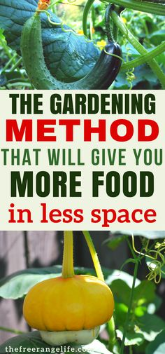 Vertical Gardens: Learn all about how to grow vertically in your vegetable garden! Grow more food in less space | Organic Gardening Tips | How to Grow | Gardening for Beginners