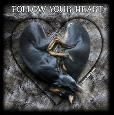 Follow your heart, with the love of a min pin!!!!! <3