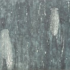 Cicada, Etching, Aquatint, blue grey, insects, tree trunk, winged insect, original print, limited edition, surface texture, printmaking