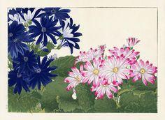 Tanigami Konan Western Flower Woodblock Prints 1917