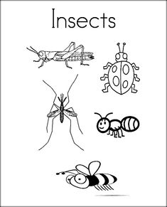 10 Insects Coloring Pages Ideas Insect Coloring Pages Animal Coloring Pages Coloring Pages