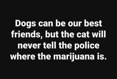 Dogs can be our best friends, but the cat will never tell the police where the marijuana is.