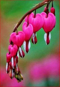 Heart Tassle (35 pieces)