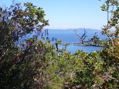 A view from Mt. Doug. #beauty #gordonhead