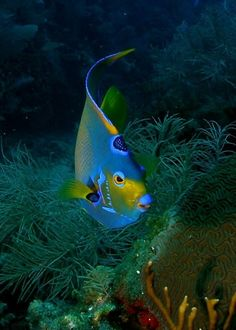 sea and ocean life - fish Underwater Creatures, Underwater Life, Ocean Creatures, Colorful Fish, Tropical Fish, Fauna Marina, Beautiful Sea Creatures, Life Under The Sea, Beneath The Sea