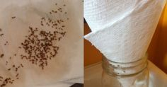 Say goodbye to fruit flies and gnats for good – the paper towel trick changes everything. Fruit flies and their close cousins gnats, are both species of . Home Design, Best Paper Towels, Fruit Flies, Fly Traps, Saying Goodbye, Home Remedies, Natural Remedies, Tricks, Cleaning Hacks