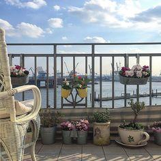Aufm Balkon ist der Frühling gestern endlich auch angekommen ☘ Hauptsache es friert nicht nochmal. Naja,das härtet ab  #balcony #balconyview #balkon #blooms #decor #decoration #details #flowers #flowerstagram #frühlinginhamburg #germaninteriorblogger #hafen #hafenliebe #Hamburg #hh #home #homeinspo #homesweethome #myhome #myview #plants #springishere
