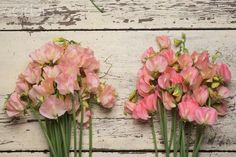 Sweet Pea 'Spring Sunshine Peach' and 'Spring Sunshine Champagne'. Lathyrus odoratus. 6-8' tall.