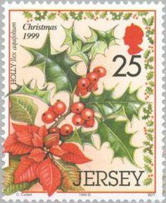 Christmas plants. Holly - Ilex aquifolium