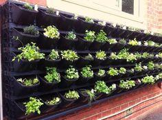 What Is Aquaponics Farming #Aquaponics  #NummularEczema Jardin Vertical Diy, Vertical Garden Design, Small Garden Design, Vertical Vegetable Gardens, Vegetable Garden Planning, Vegetable Garden Design, Vegetable Gardening, Small Space Gardening, Small Gardens