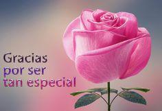 rosa-rosa-mensaje-gracias-por-ser-tan-especial-para-compartir