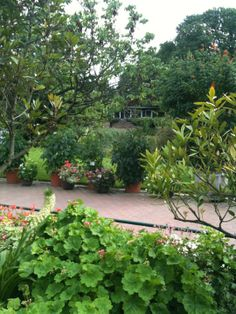 Die Flora ist ein städtischer botanischer Garten, der mit einer Vielzahl exotischer Pflanzenarten und der ersten Palmenallee Deutschlands zum Flanieren abseits des Großstadtlärms lockt.