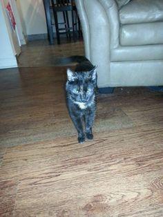 Found Cat - Tortoiseshell - Hamilton, ON, Canada L8R 1L5 on August 01, 2015 (02:00 AM)