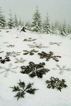 Make giant snowflakes with branches and sticks. Form giant snowflakes with branches and sti Noel Christmas, Winter Christmas, Winter Holidays, Christmas Decor, Natural Christmas, Thanksgiving Holiday, Outdoor Christmas, Land Art, Winter Fun