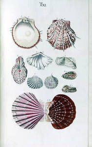 old botanical of natural forms