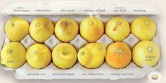 limoni cancro seno foto