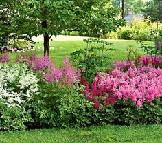 I love astilbes, which do great in the shade, and this is a big ol' collection for not a lot of money.