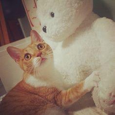 #CheeseCat #Suni #koreanshorthair #cat #cats #catsofinstagram #kitten #고양이 #냥이 #ねこ #猫 #kittiesofinstagram #catale #catoftheday #photooftheday #instacat #cute #catstagram #neko - @a_pictory- #webstagram