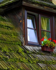 Kazimierz Dolny, Lublin, Poland Poland History, Tatra Mountains, 10 Picture, Window View, Krakow, Balconies, Culture Travel, Windows And Doors, Shades Of Green