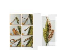 "ru / Galazil - The album ""Examples of using tape"" Majestik """" Diy Ribbon Flowers, Ribbon Work, Needlepoint Stitches, Needlework, Ribbon Embroidery, Cross Stitch Embroidery, Fabric Embellishment, Types Of Stitches, Satin Stitch"
