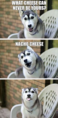 Worst Puns Ever That Are Doggone Hilarious see all at >>  http://omgshots.com/3593-worst-puns-ever-that-are-doggone-hilarious.html