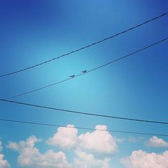 Couple.  #birds #cuties #cute #couple ' #lovers #birdlovers #landscape #bluesky #sky #blue #view #beautiful #nature #animals #animal #fecske #swallow #may #spring #loveisintheair #literally by fruzimuzi23
