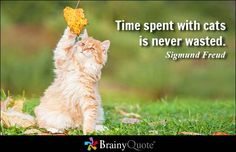 Time spent with cats is never wasted. - Sigmund Freud #time #QOTD
