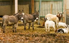 Donkey and Water Buffalo Meat Found in South Africa