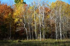 Stony Creek Swamp  #photooftheday Stony, Gallery, Plants, Photography, Roof Rack, Flora, Plant, Photograph, Fotografie