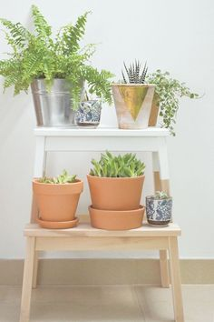 Hacks Your Green Friends Will Love IKEA Hack paint stool for a fun plant stand.IKEA Hack paint stool for a fun plant stand. Plant Hacks, Plant Stand, Diy Hanging Shelves, Ikea Hack, Ikea, Diy Ikea Hacks, Diy Plants, Ikea Plants, Ikea Step Stool