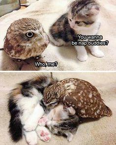Cute Animal Memes, Animal Jokes, Cute Animal Pictures, Cute Funny Animals, Funny Cute, Cute Cats, Crazy Pictures, Funny Kitties, Hilarious Pictures