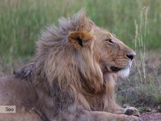 Photograph DEMAND JUSTICE FOR CECIL THE LION IN ZIMBABWE by Libor Ploček on 500px