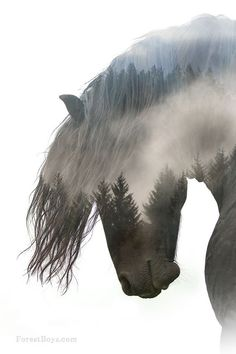 Horse and the tree tops, misty and beautiful double exposure horse photography. Double Exposure Photography, Horse Photography, Levitation Photography, Surrealism Photography, Water Photography, All The Pretty Horses, Beautiful Horses, Horse Drawings, Horse Head Drawing