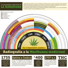 Marihuana medicinal, ¿Colombia está lista? - Especial multimedia Diario El País