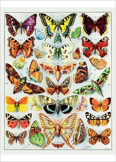 antique exotic butterflies french illustration by -- FrenchFrouFrou. Featured on Etsy. Paper Butterflies, Butterfly Art, Beautiful Butterflies, Types Of Butterflies, French Illustration, Butterfly Illustration, Arte Fashion, Paper Owls, Insect Art