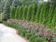 Awesome Fence With Evergreen Plants Landscaping Ideas 30 #FenceLandscaping