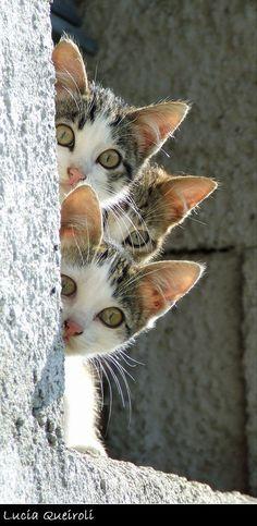 mostlycatsmostly: Curious (via Lucia Queiroli)