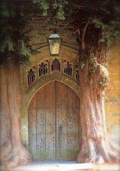 Oooh, a fairytail doorway!!  Woodsy door  #doorway #door