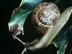 Back Yard Science - Snails