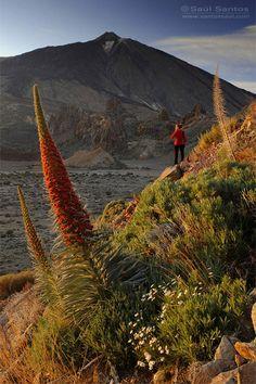 Teide National Park, Tenerife, Canary Islands, Spain ~(Saul Santos Diaz - photographer)