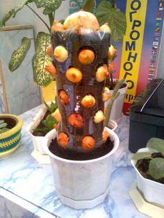 Pet şişede balkonda sebze,taze soğan yetiştirme