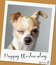Happy Wednesday my friend. I fink is Thump day ; Wednesday Memes, Wacky Wednesday, Wonderful Wednesday, Happy Day Quotes, Its Friday Quotes, Good Morning Quotes, Morning Memes, Mom Quotes, Qoutes