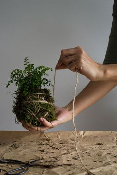 To Make A Kokedama Hanging Garden How to make a Kokedama hanging plant moss ballHow to make a Kokedama hanging plant moss ball Moss Balls, Plants, Hanging Plants Indoor, Kokedama, Diy Plants, Floating Plants, Hanging Garden, Moss Garden, Indoor Plants